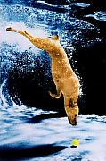 Jill Reger - Diving Dog Underwater