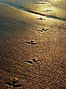 Jill Reger - Footprints - Bird