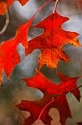 Jill Reger - Red Autumn Leaves